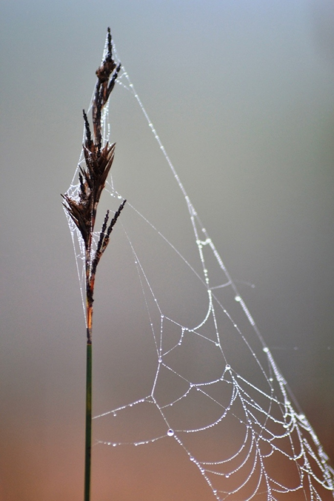 Rising early in the morning has its advantages. Dew drops create mood to any small images.
