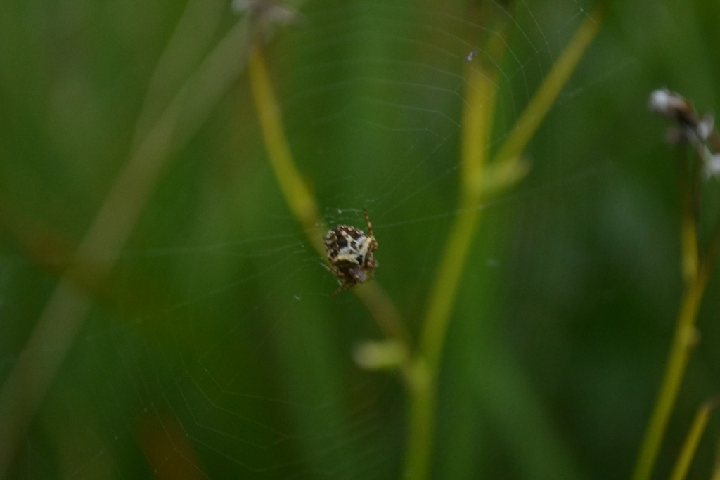 Blurry spider: This is the perfect example of the terrible results achieved when not enough light enters the camera.