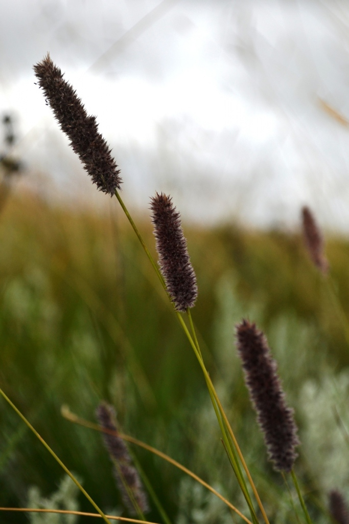 Grass up close with shallow aperture: When using a shallow aperture (low f-number), your background will be less busy.