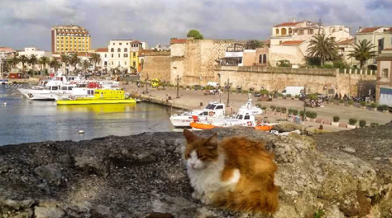 Alghero city port, cat and fortress