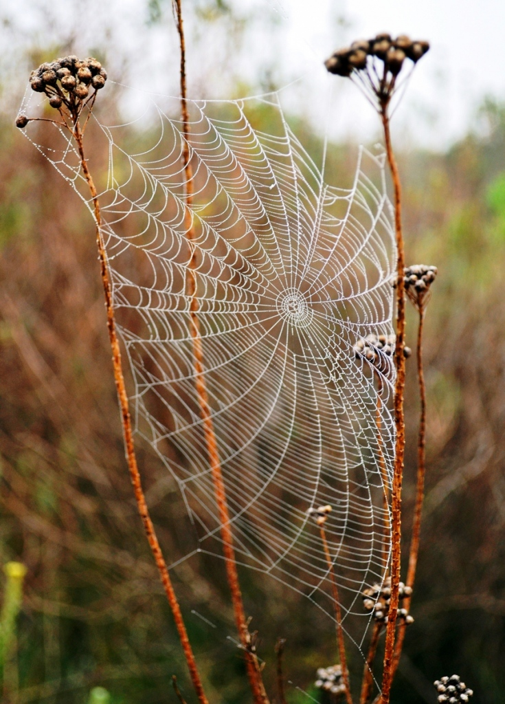 Detailed spiderweb: Viewers can read a photograph in many ways, but lots of details is a good method to give that wow factor, to keep their glance a little longer.