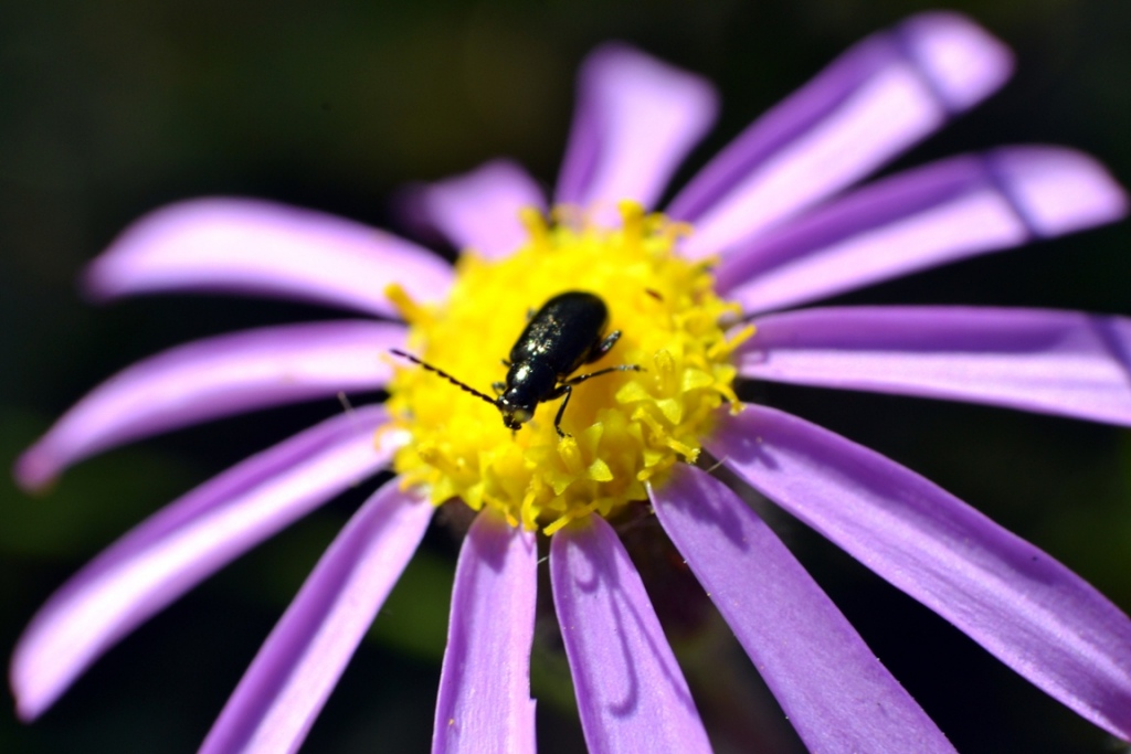 Sharp focus on bug and flower: Evaluate the quality of your pictures by creating close up images. Without sharp focus you won't draw the attention of those that look at your work.