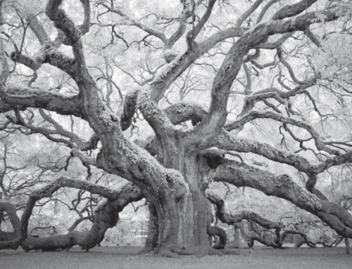 The Other World of Infrared Photography